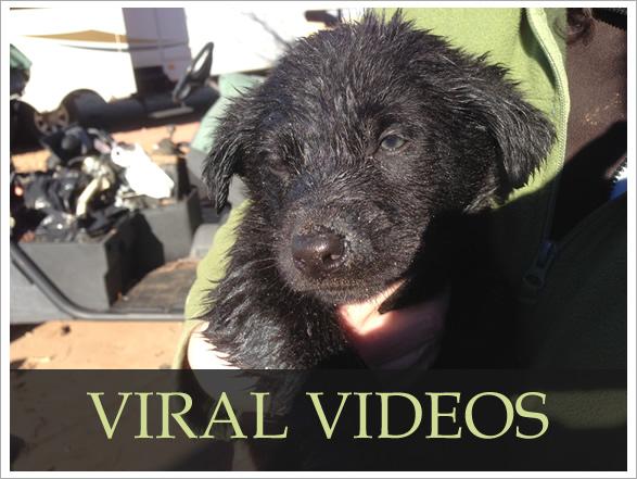 viral-videos-wp